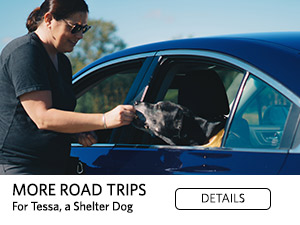 MORE ROAD TRIPS For Tessa, a Shelter Dog. Details